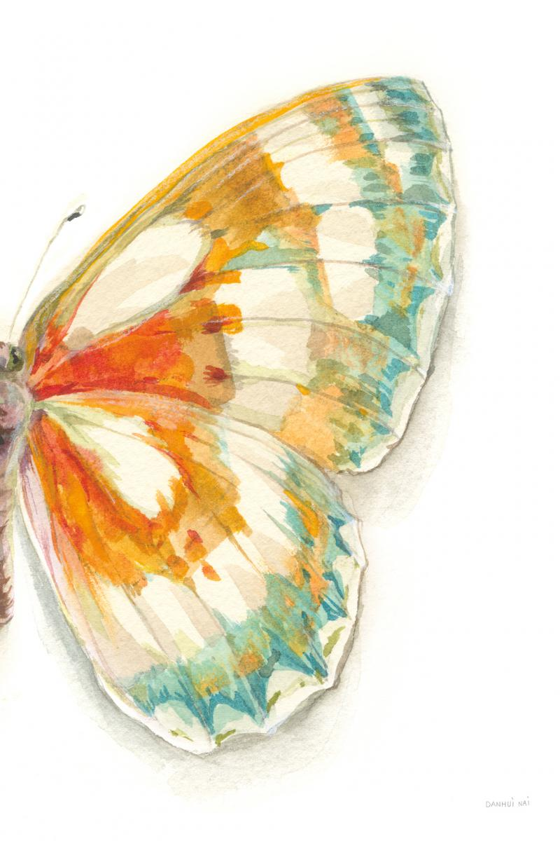Fragile Wings IV