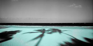 Palm & Sands