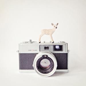 Deer & Vintage Camera
