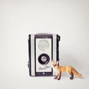 Fox & Vintage Camera
