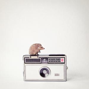 Hedgehog & Vintage Camera