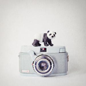 Panda & Vintage Camera