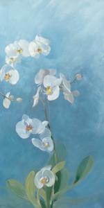 Phalaenopsis Fontaine III