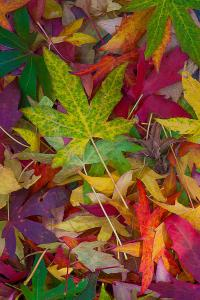 Candy Leaves