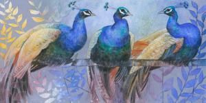 Three Peacocks