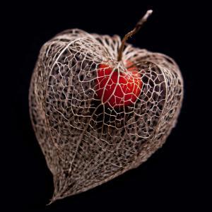 Lantern Heart I