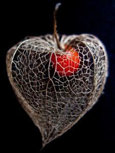 Lantern Heart II