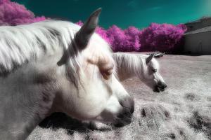 Fantasy Horses