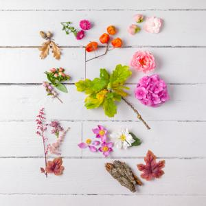 Eclectic Plants I