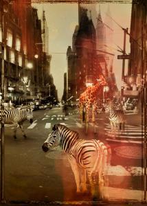 Zoo City - Zebras