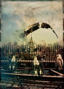 Zoo City - Vultures