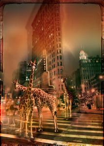Zoo City - Giraffas