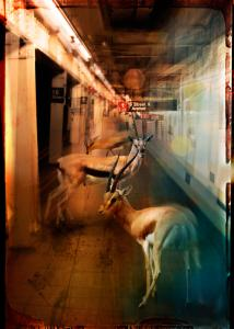 Zoo City - Gazelles
