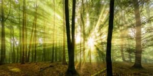 Nebelstimmung mit Sonne im Wald