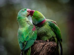 Green Parrot I