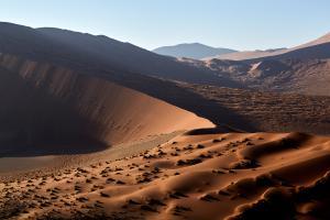Dunewaves