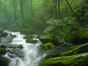 Roaring Fork River flowing through fores