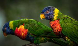 Green Birds
