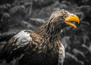 Stellar Eagle
