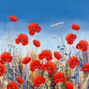 Poppy Meadow II