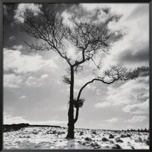 Lone Tree # 2, Peak District, England