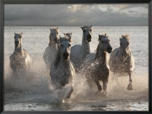 Horses Landing at the Beach