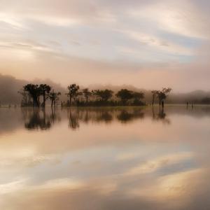 Dawn Mist on the Amazon