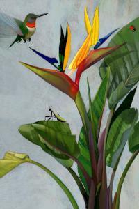 Humming Bird of Par…