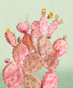 Pink Cacti