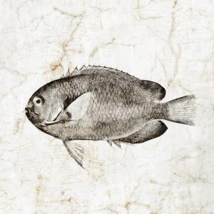 Vintage Fish III