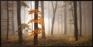 In November Light