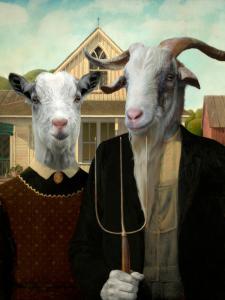American Goat