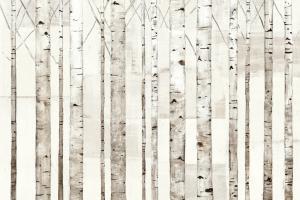 Birch Trees on White