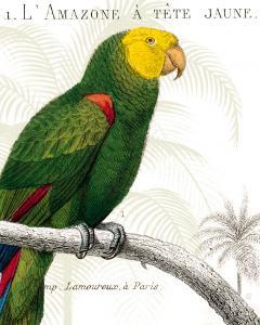 Parrot Botanique I