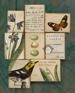 Birds and Butterflies I