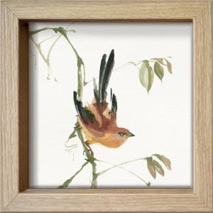 Mountain Bush Warpler