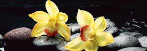 Still life with orange orchid with water