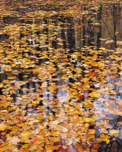 Autumn Detail