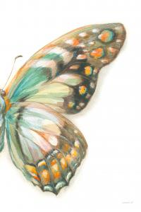 Fragile Wings II