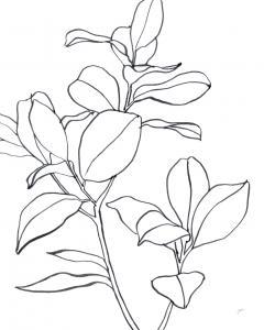 Magnolia Branch I
