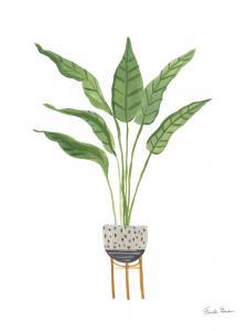 Green House Plants III