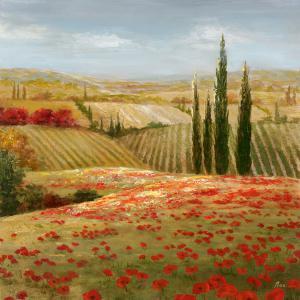 Tuscan Cypress II