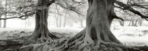 Exmoor - Devon - England