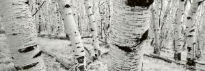 Dixie National Forest - Utah - USA