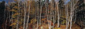 Birch Grove, Nova Scotia