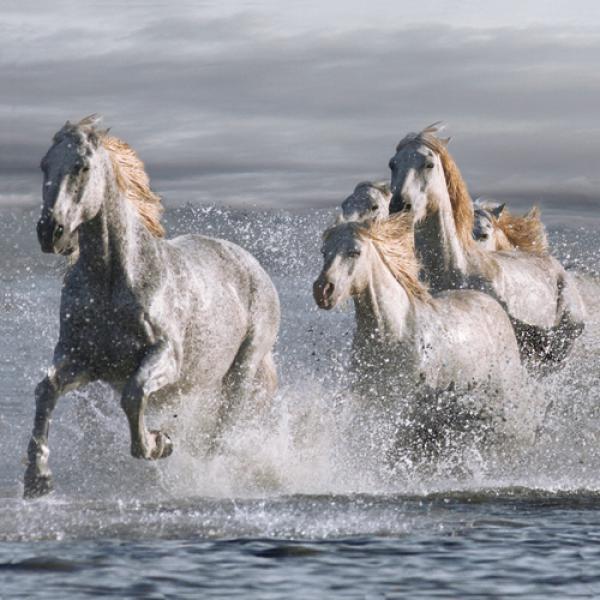 Horses Running at the Beach