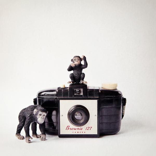 Monkey & Vintage Camera