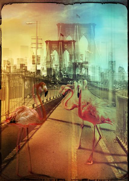 Zoo City - Flamingos
