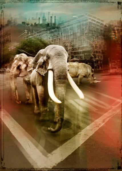 Zoo City - Elephants