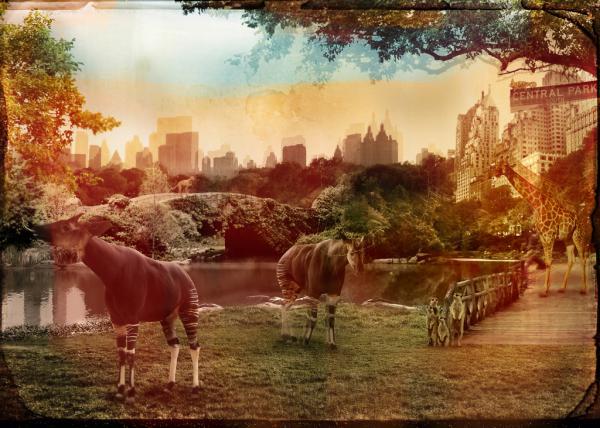 Zoo City - Okapis